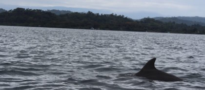on the day we found our great hostel in Bocas Town we also spotted a dolphin