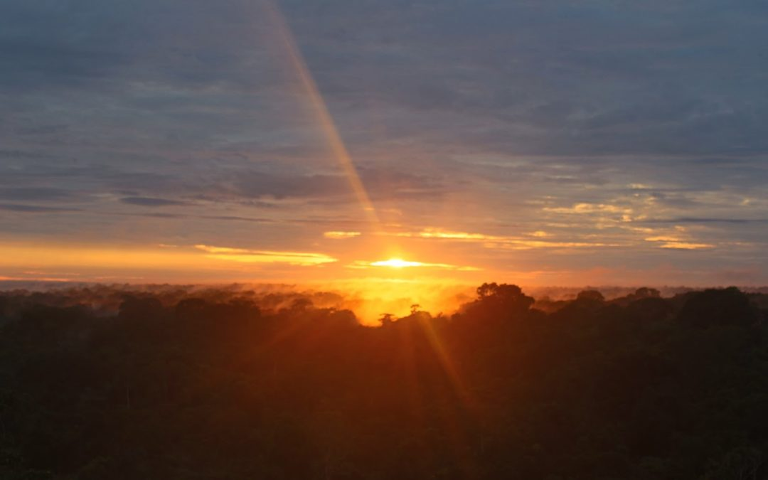 South America: Peru and Sunrise View over the Amazon Canopy